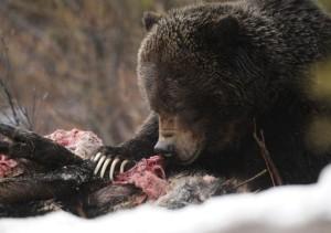 bear122