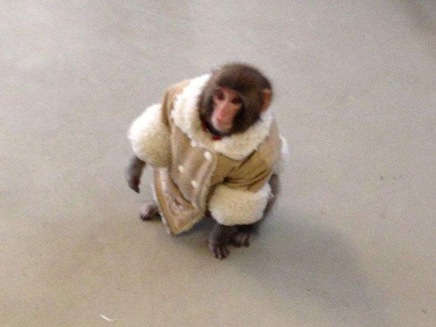 Ikea Monkey/Bronwyn Page