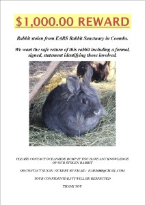 stolen rabbits