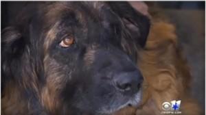 close-up-sid-the-dog-380x213