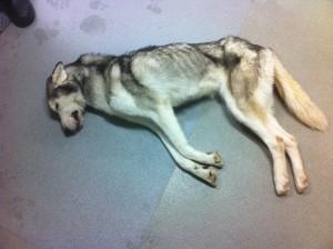 deaddog
