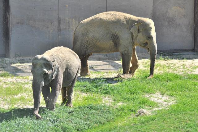 elephantsinDC