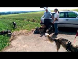 dogwheelchairs2