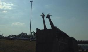 410731Giraffe-jpg