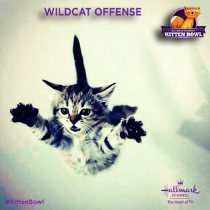 KittenBowl2