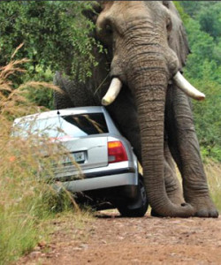 elephant planesburg