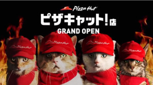 pizzacatjapan