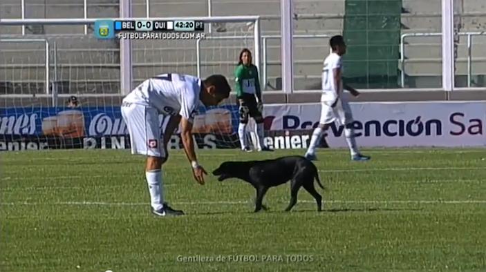 footballdog1