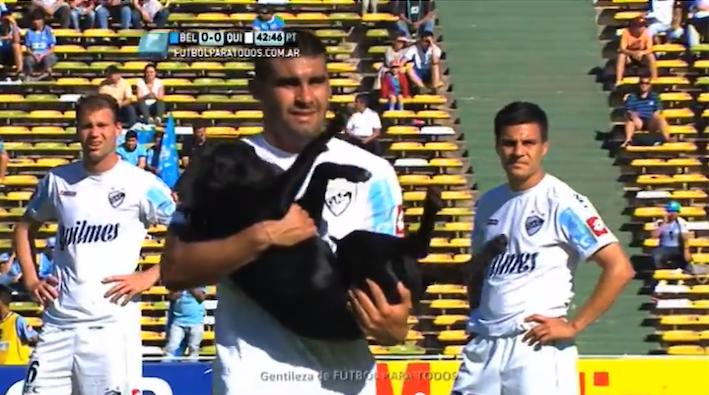 footballdog2