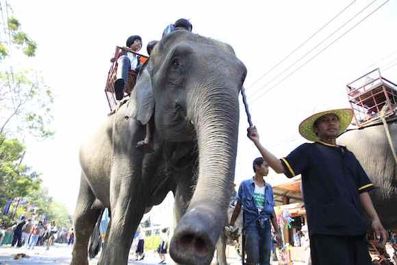 ElephantTRAFFICreport
