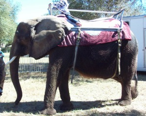 Nosey-the-Elephant-3