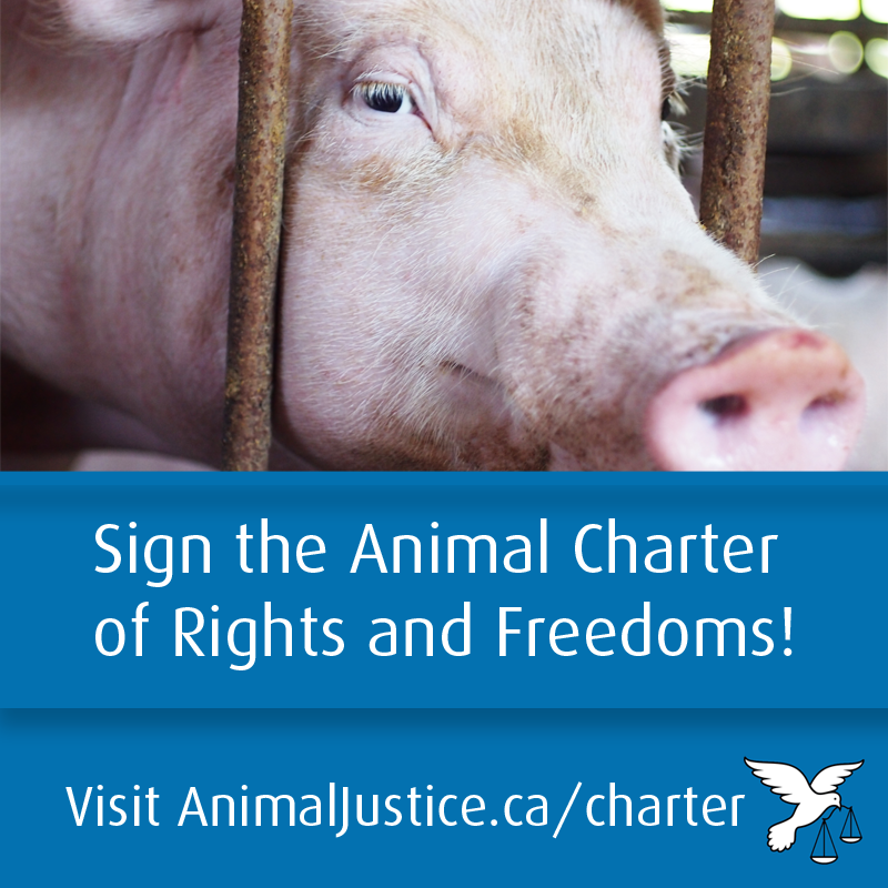 animaljusticecharter