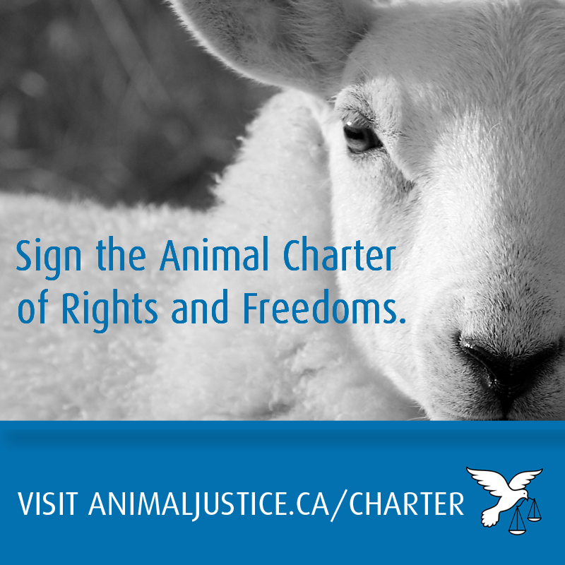 animaljusticecharter2