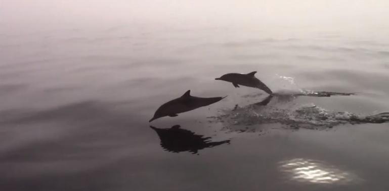 dolphinsmonterey
