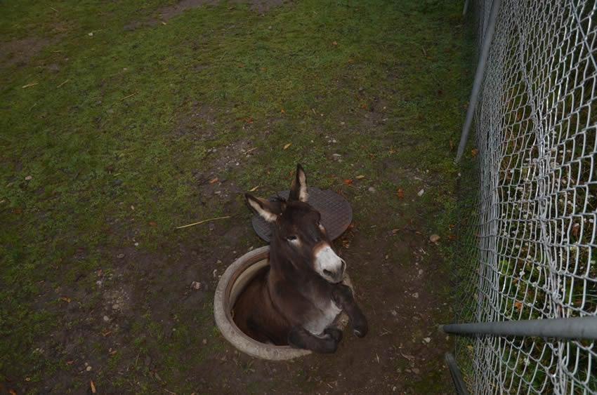 donkeybasel