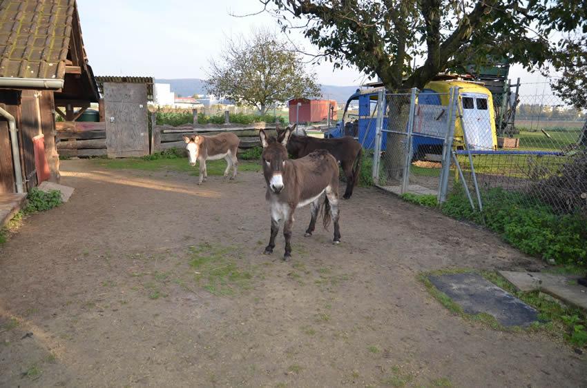donkeybaselrescue4