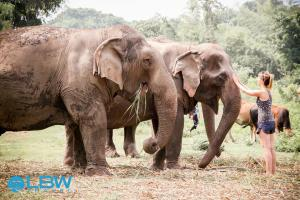 elephantsLBWTRAVEL