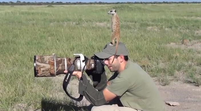 meerkatsWillBurrardLucas