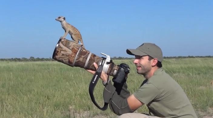 meerkatswillburrardlucas2