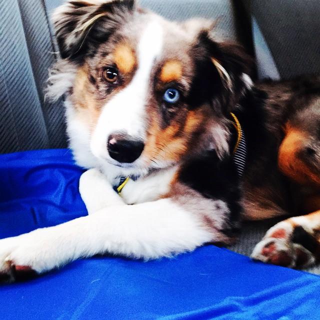 OakleyFrozensingingdog