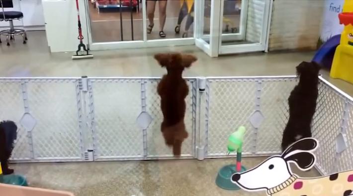 dancingdog2