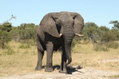 elephanthwange