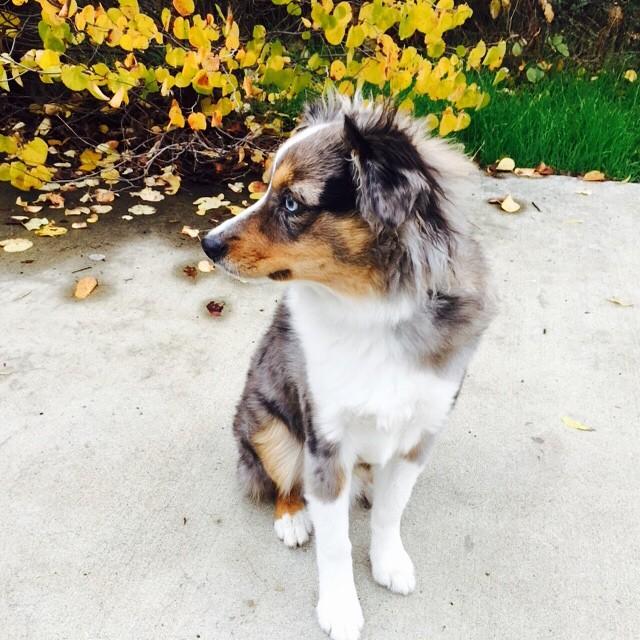 oakleyfrozensingingdog3