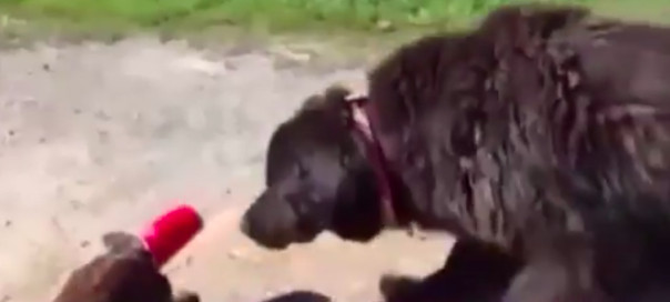 Dog Helps Cat With Cup On Head