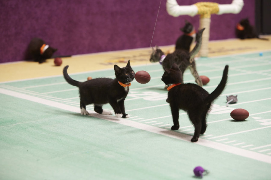 kittenbowl2-000957