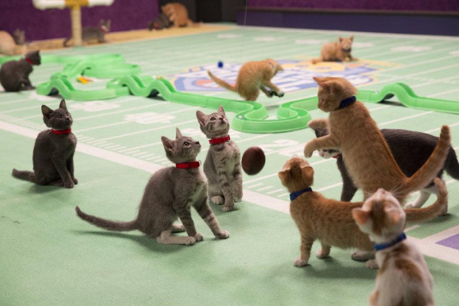 kittenbowl2-001061