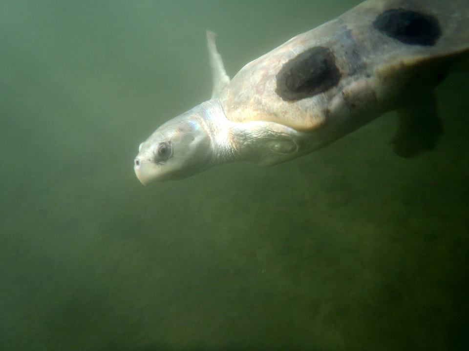 turtlebenderdiving