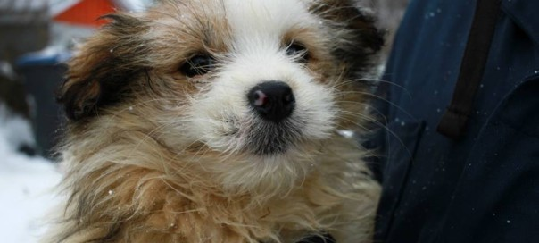 Quebec Puppies Pregnant Dogs Rescued In Bitter Cold