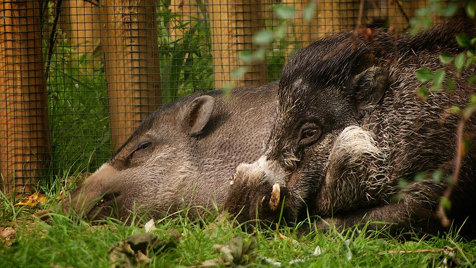 Bob Pitchford/Bristol Zoo