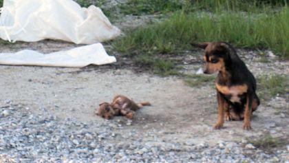 dead-puppy3