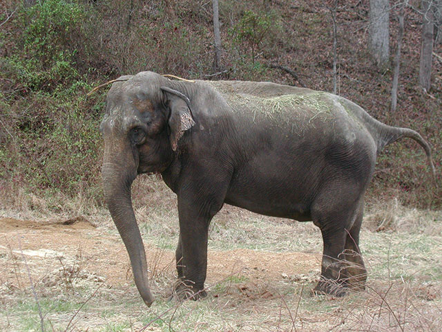 The Elephant Sanctuary of Tennessee