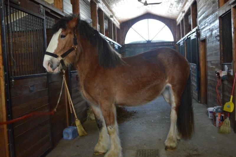 horseOSPCA