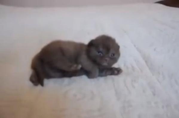 tinypettingaddictcat