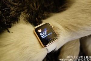 13015-7372-wang-si-cong-dog-apple-watch4-l