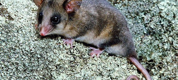 Princess Charlotte S Birth Gives Boost To Possums
