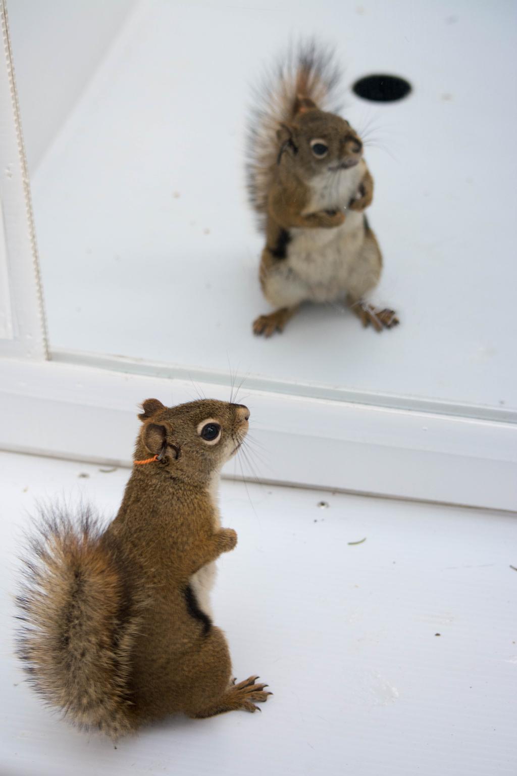 squirrelthunderdome