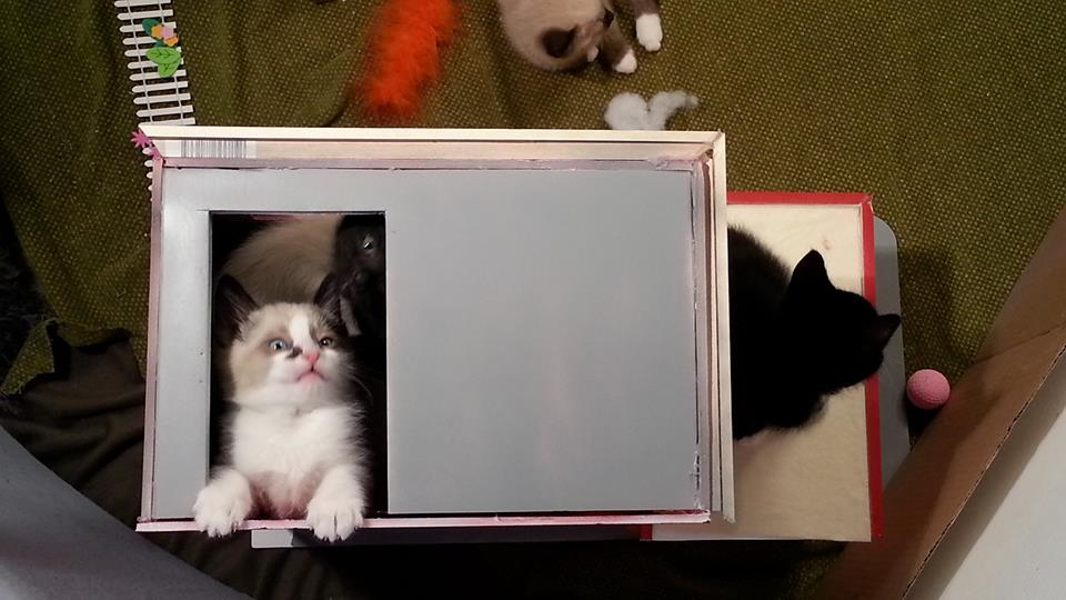 KittenTV2