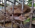baboonmexico