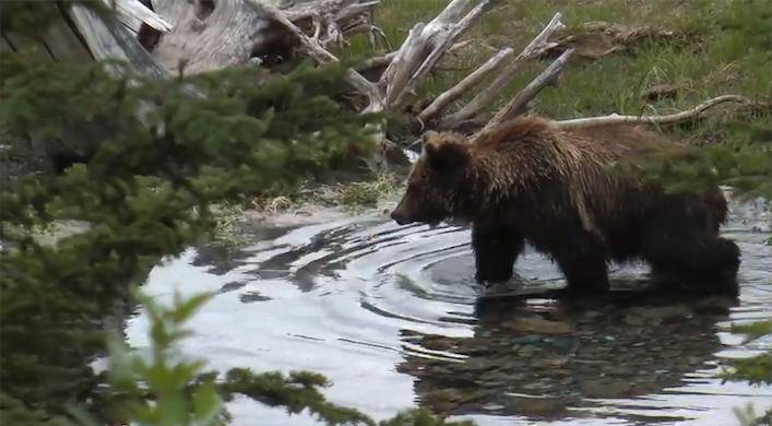 grizzlyvermilionlakes