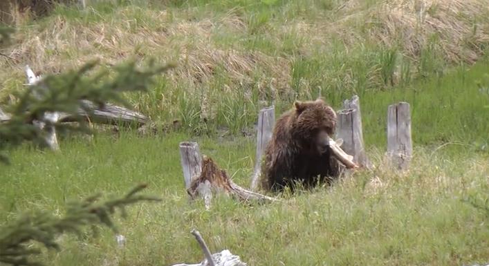 grizzlyvermilionlakesfishing