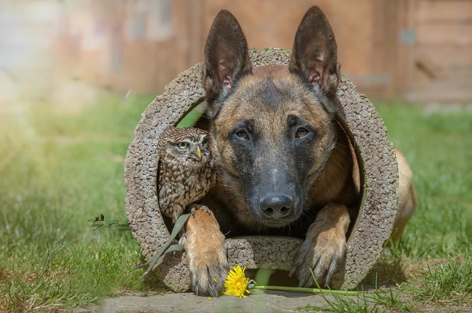 Owl&Dog3