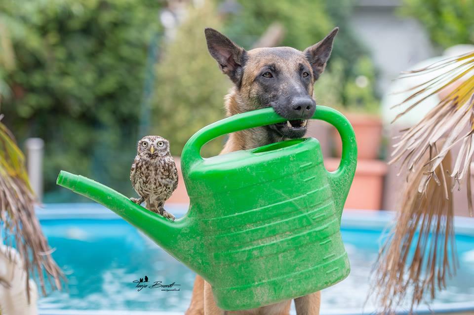 Owl&Dog4