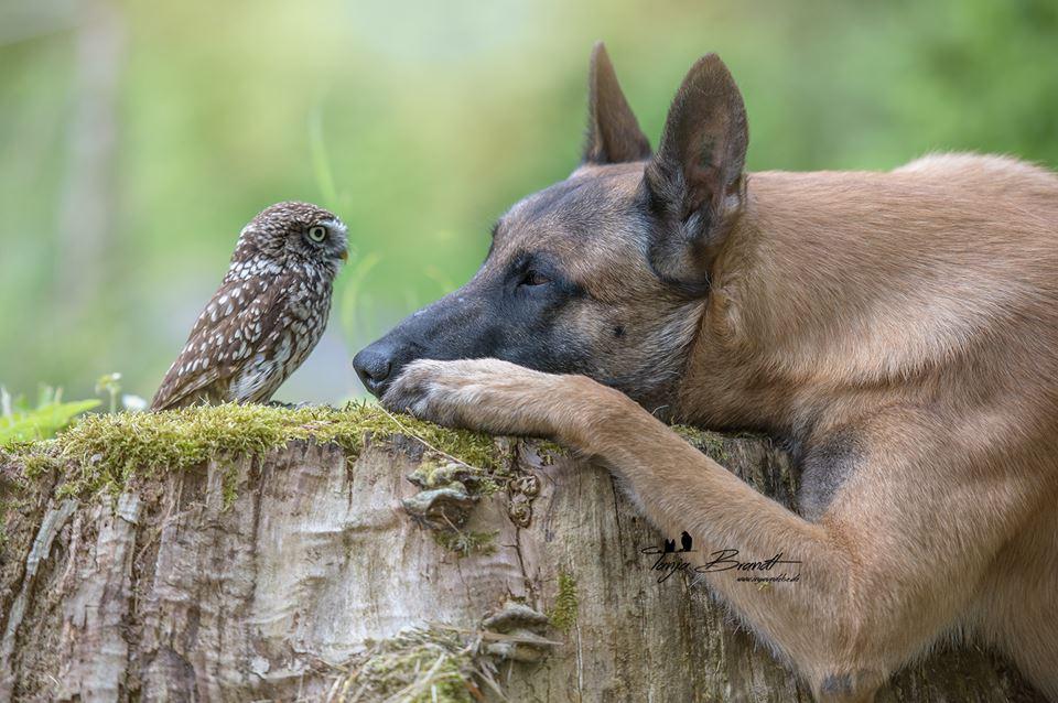Owl&Dog6