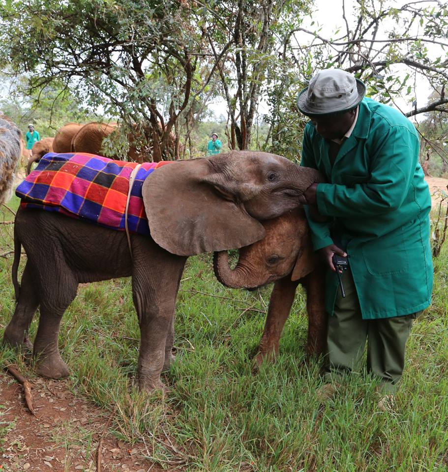 babyelephantDavidSheldrickTrust