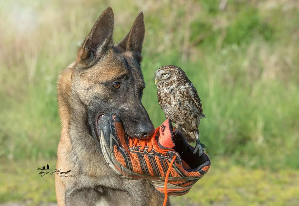 owl&dog8
