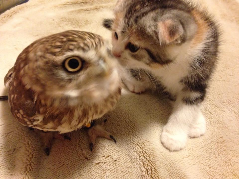 owl&kitten